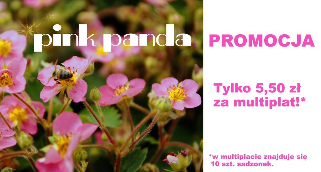promocja pink panda